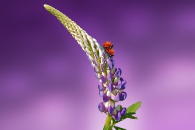 ladybug-1320562_1280