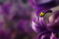 ladybug-1331779_1280
