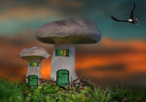 mushroom-1332745_1280