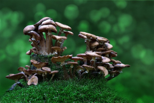 mushrooms-1344550_1280
