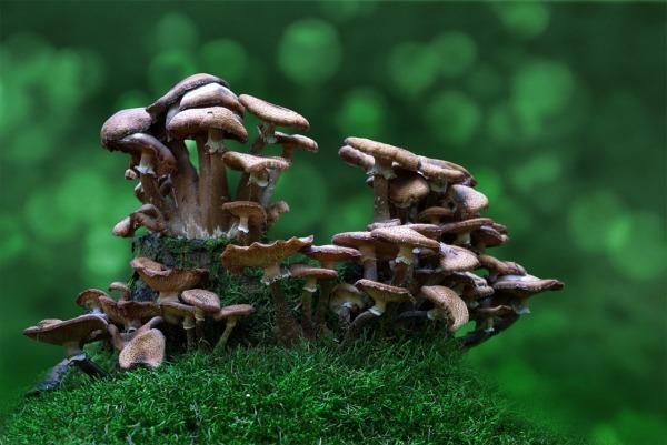 mushrooms-1344550_1280