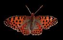 Schmetterling-14