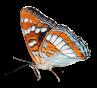 Schmetterling-18