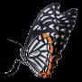 Schmetterling-23